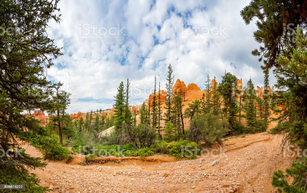 Canyon with pine trees stock photo