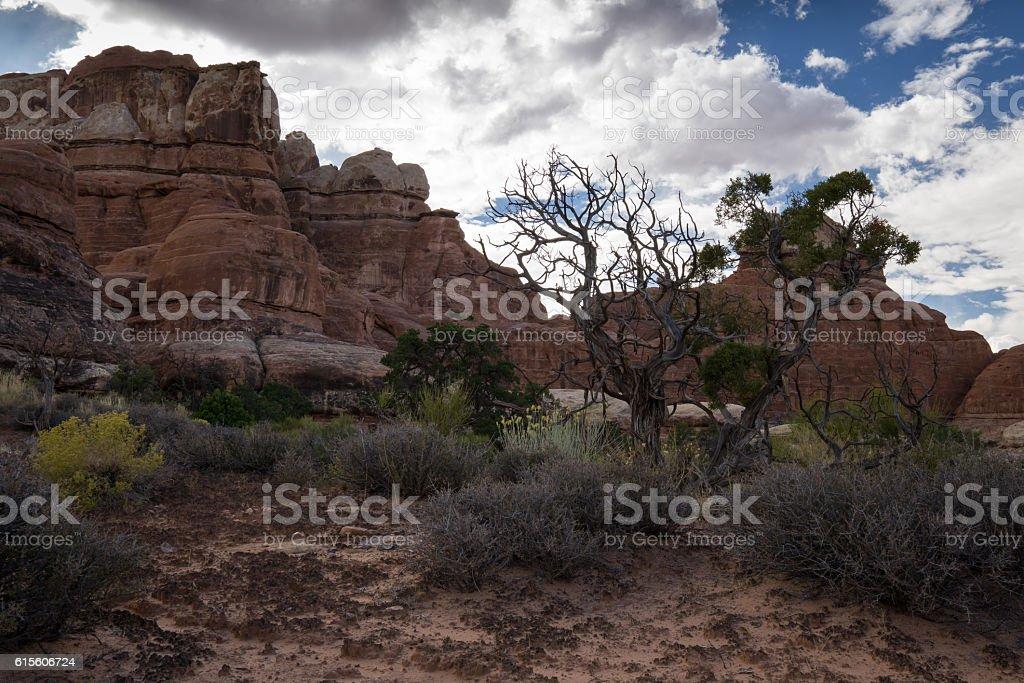 Canyonlands Backcountry stock photo