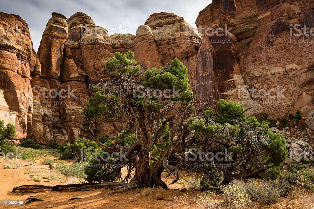 Canyonlands National Park Backcountry stock photo