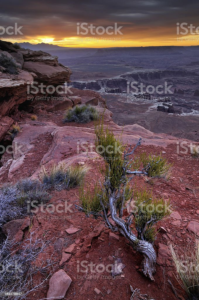 Canyonlands sunrise landscape with dry juniper tree royalty-free stock photo