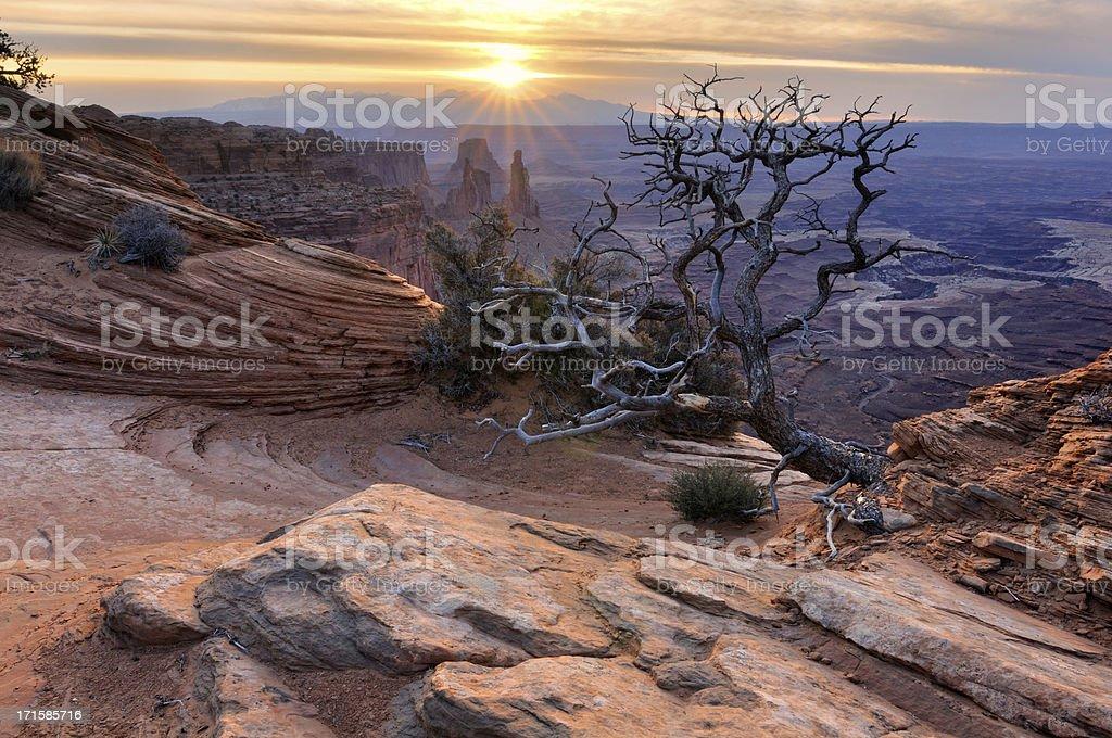 Canyonlands sunrise landscape with dry tree stock photo
