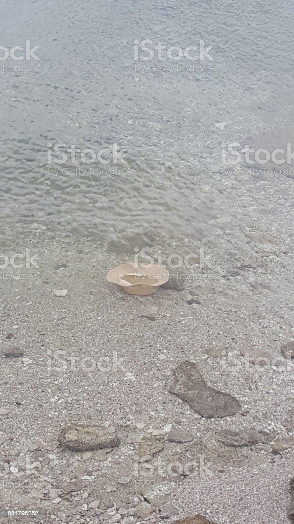Cap in Yellowstone lake stock photo