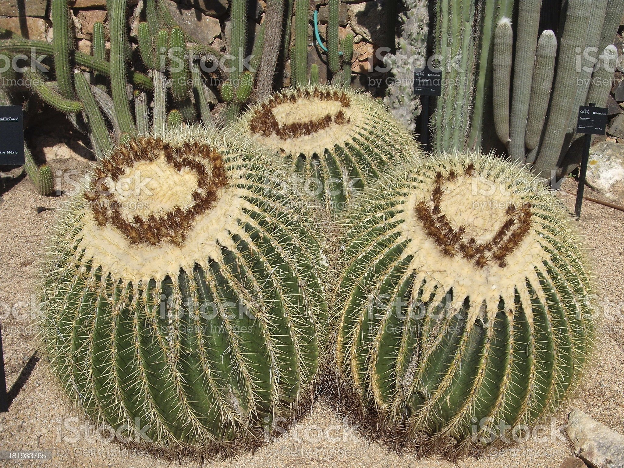Cap Roig Botanical Garden Cacti royalty-free stock photo