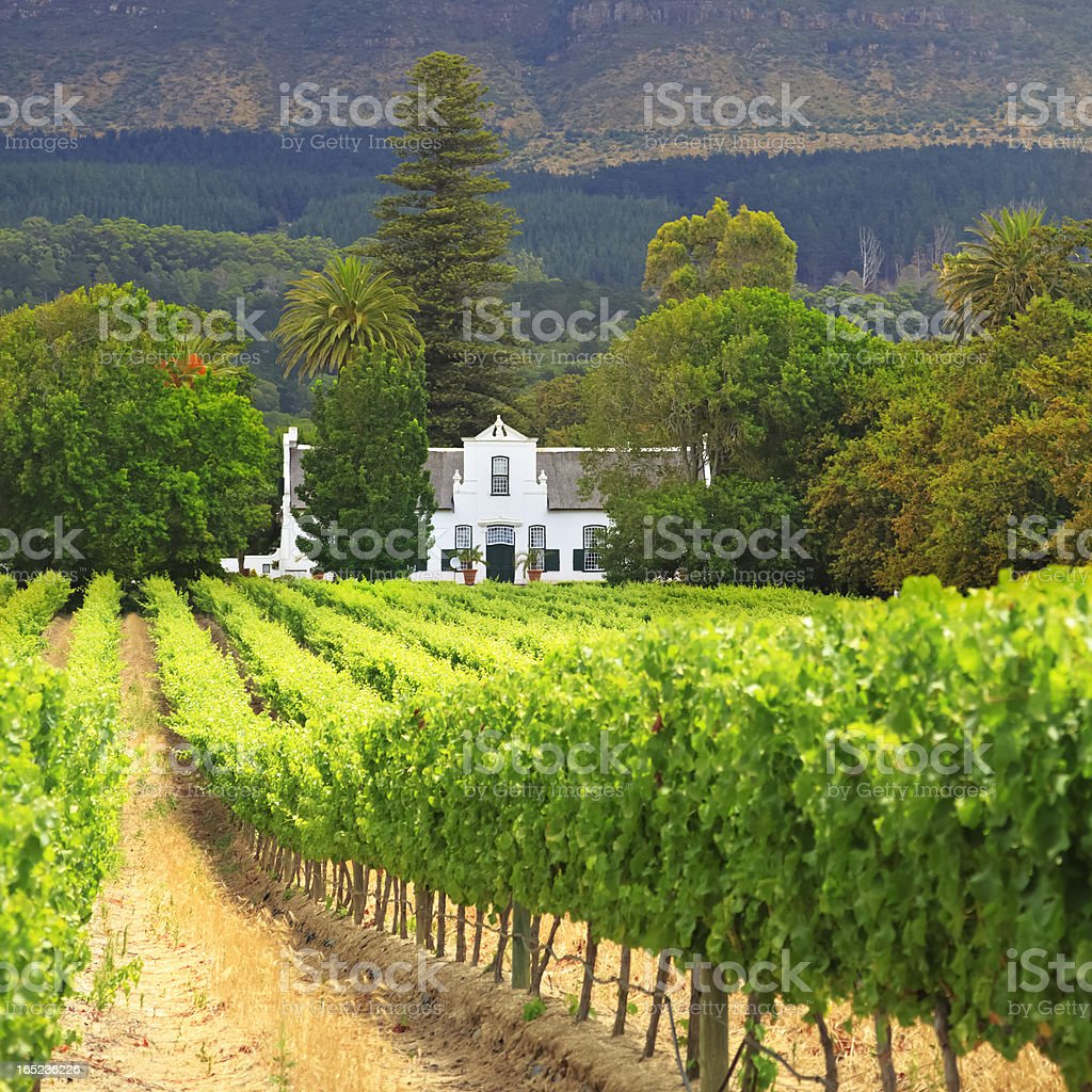 Cape Dutch Manor House and Vineyard, South Africa stock photo