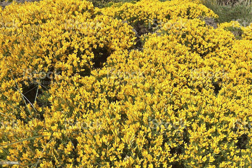 Cape Espichel Ground Cover, Portugal royalty-free stock photo
