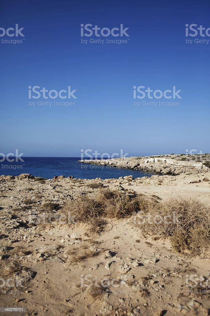 Cape Greko stock photo