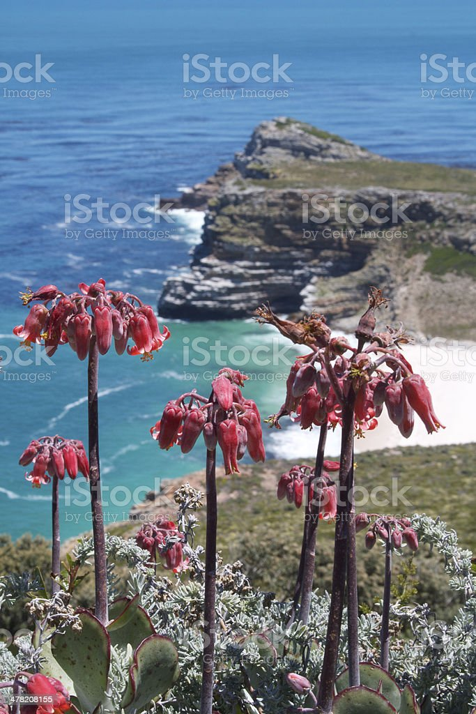 Cape Point Fynbos View stock photo