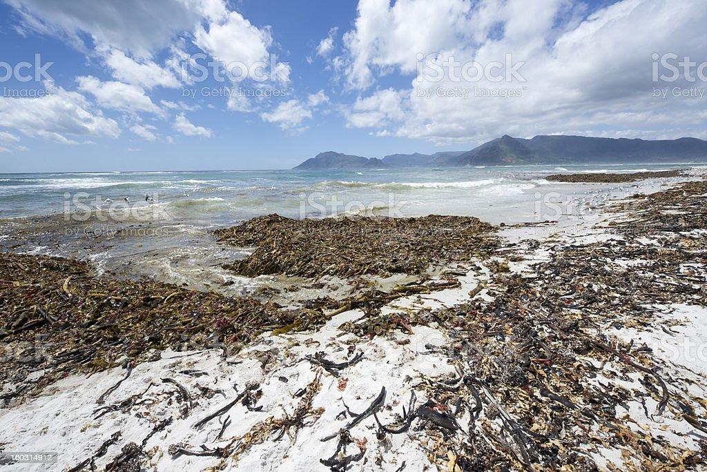 Cape town Kommetjie Beach stock photo