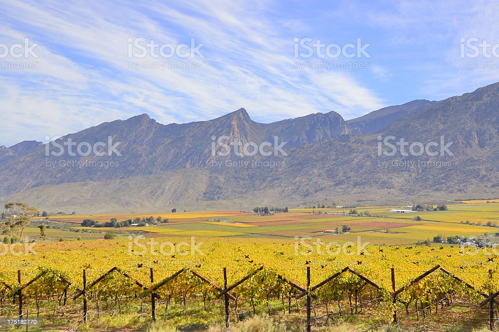 Cape Town Vineyards And Farms stock photo