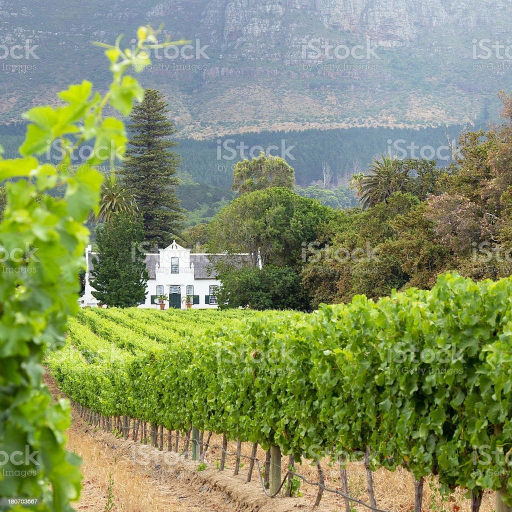 Cape Town's Vineyard Constantia Valley stock photo