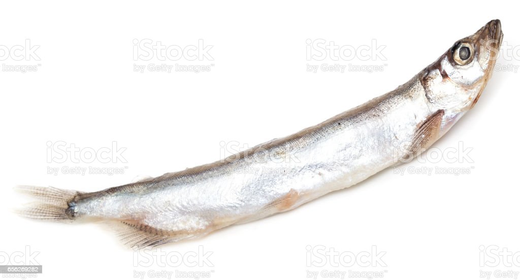 capelin on a white background stock photo