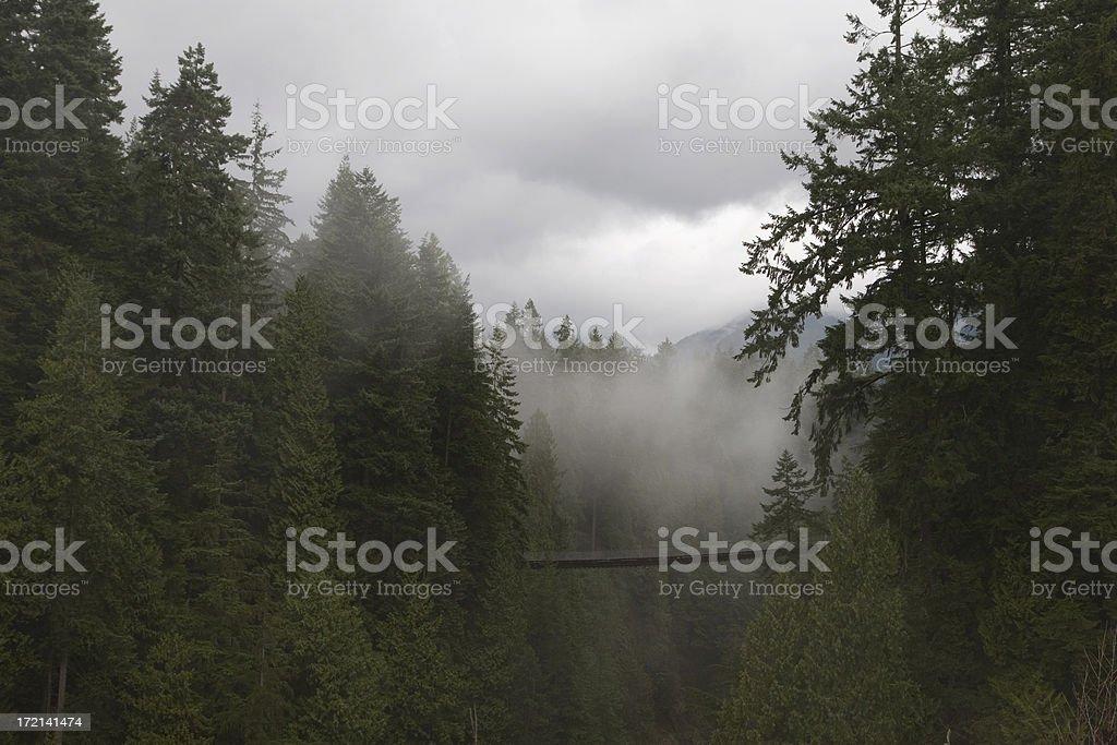 Capilano suspension bridge stock photo