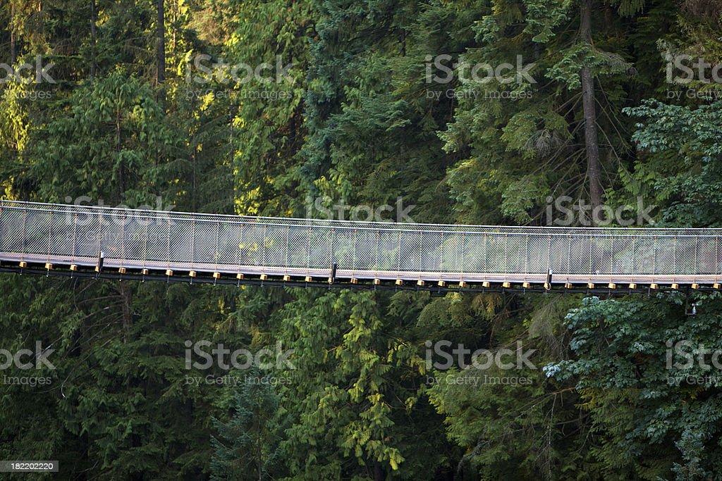 Capilano Suspention Bridge royalty-free stock photo