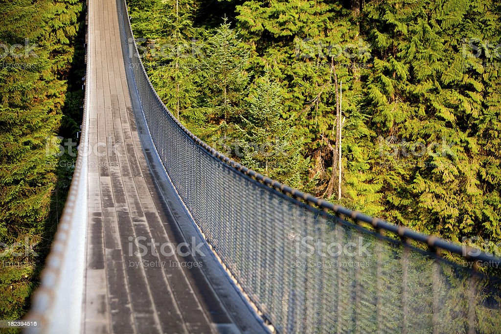 Capilano Suspention Bridge royalty-free stock photo