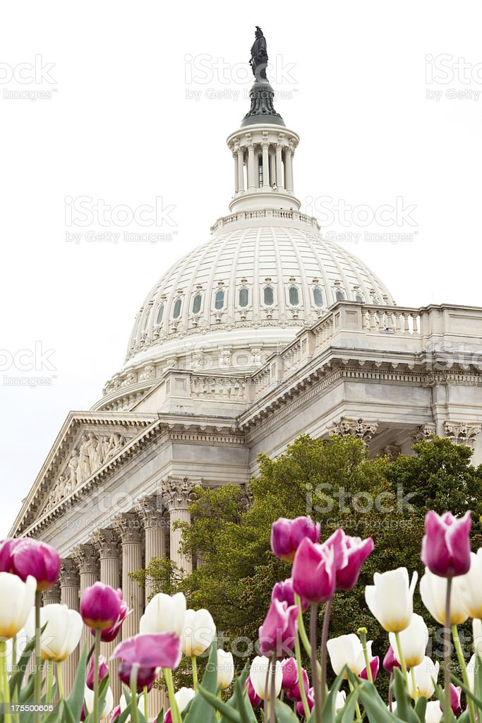 US Capitol Building and red and white flowers, Washington DC royalty-free stock photo