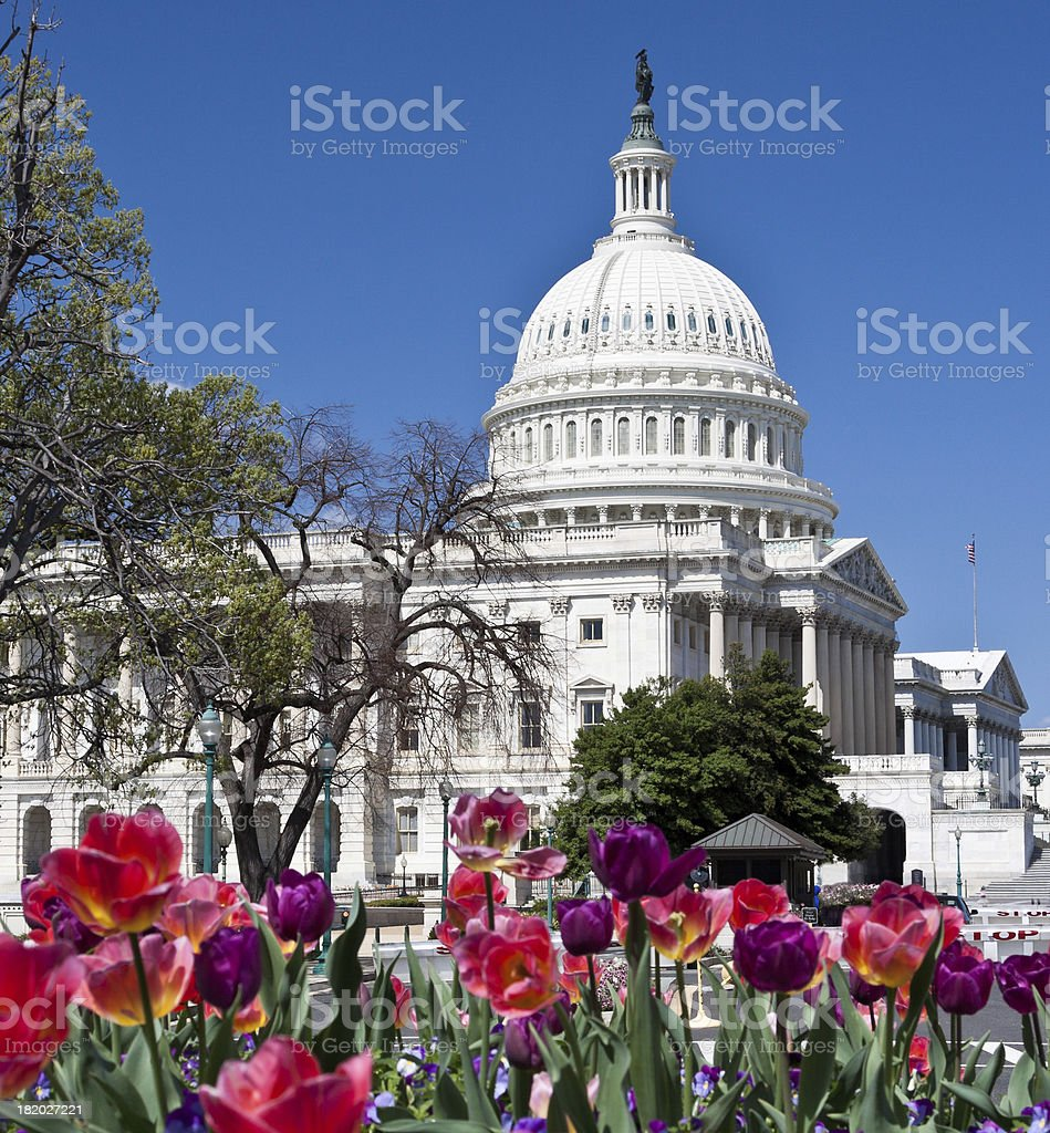 Capitol Building and red flowers, Washington DC. Clear blue sky. royalty-free stock photo