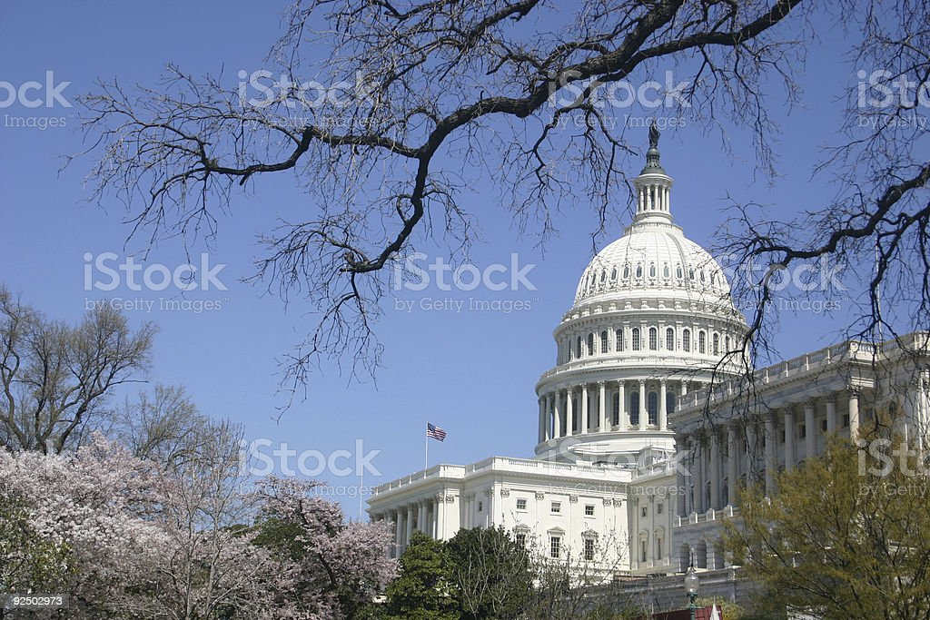 capitol from south angle w/ trees and blossoms stock photo