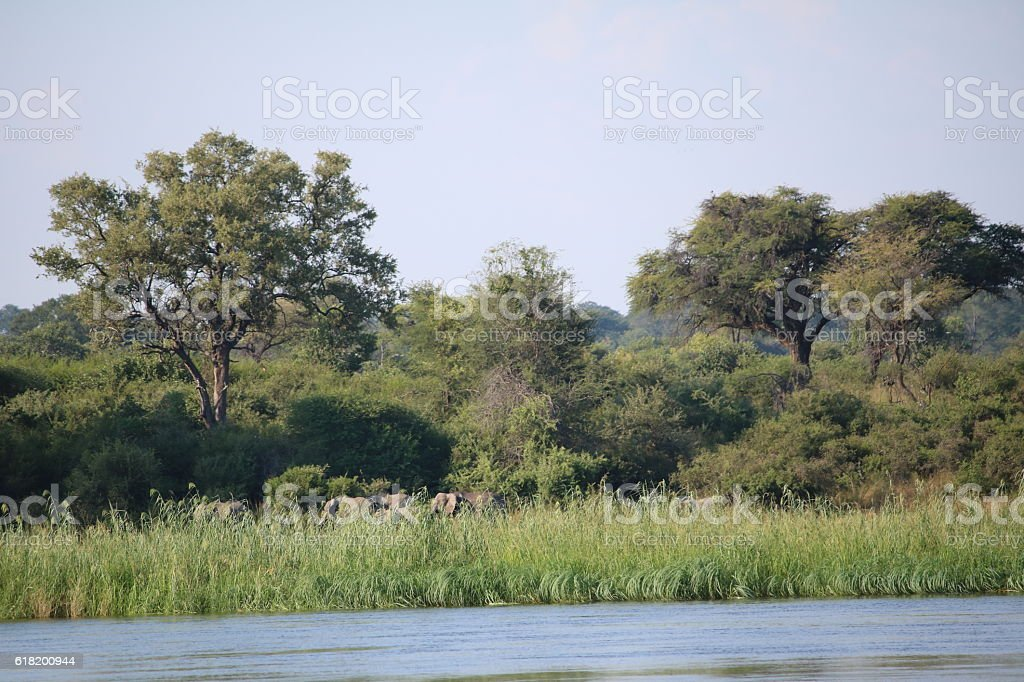 Caprivi Strip of Namibia Africa, Elephant on shore of Okavango stock photo