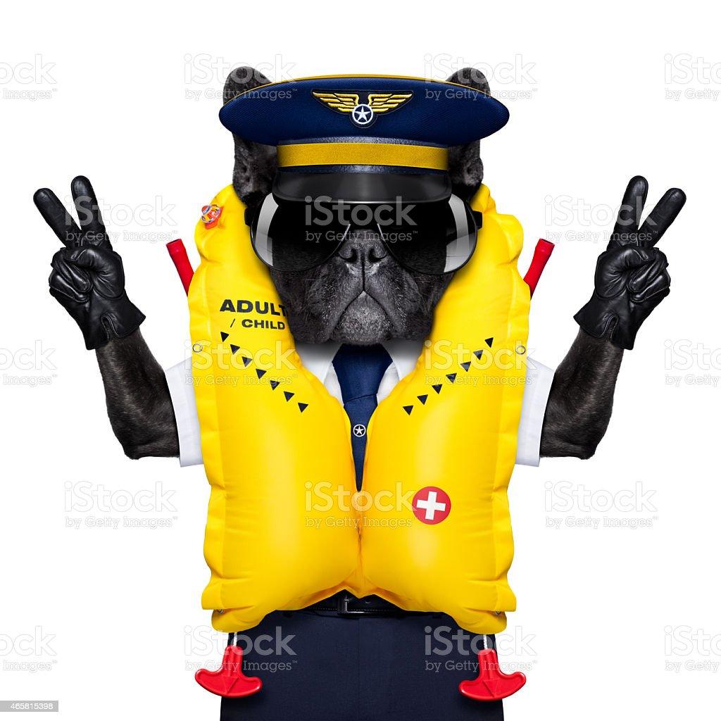 captain cockpit airline dog stock photo