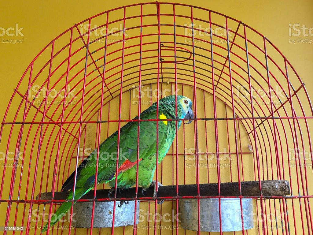 Captive parrot stock photo