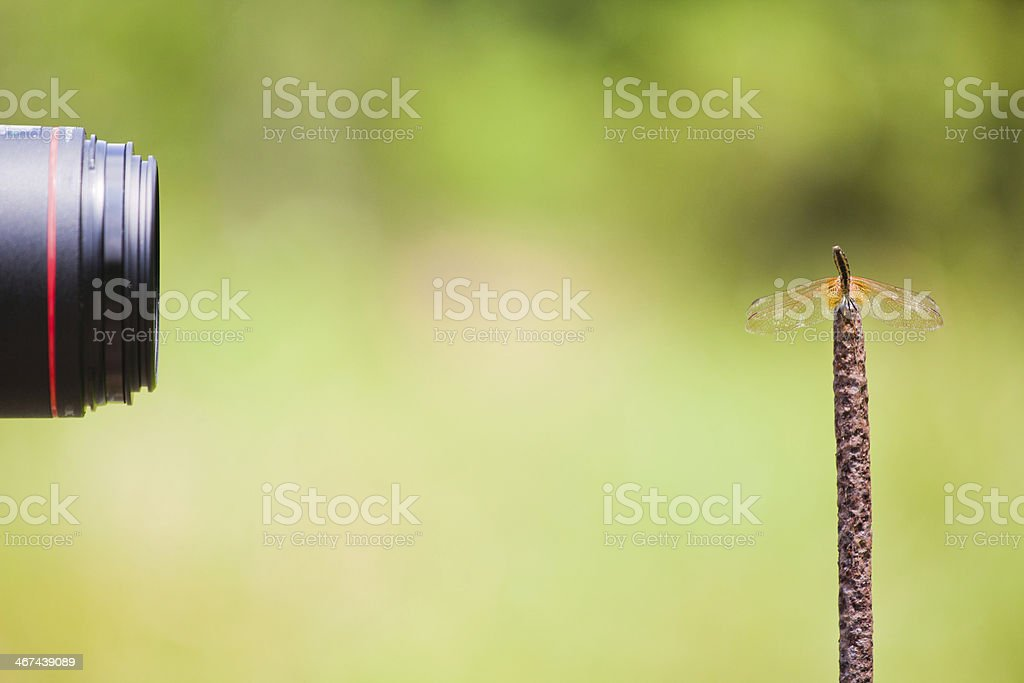 Capture a dragonfly royalty-free stock photo
