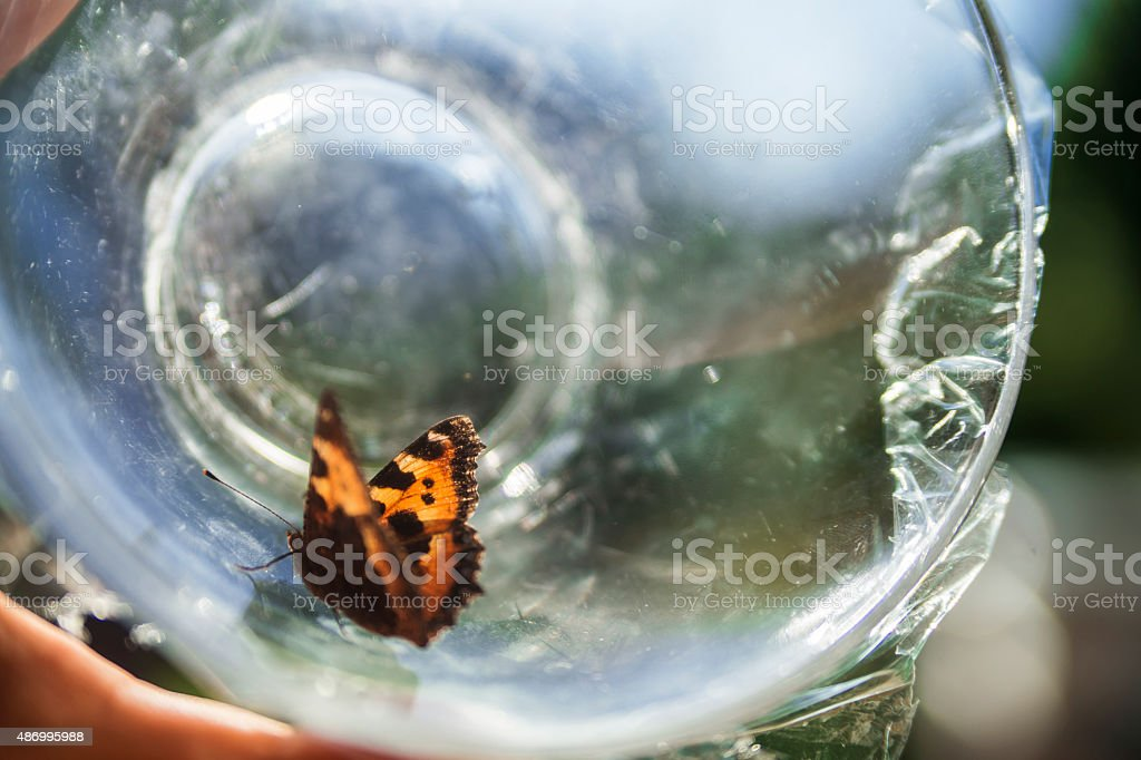 Captured butterfly stock photo