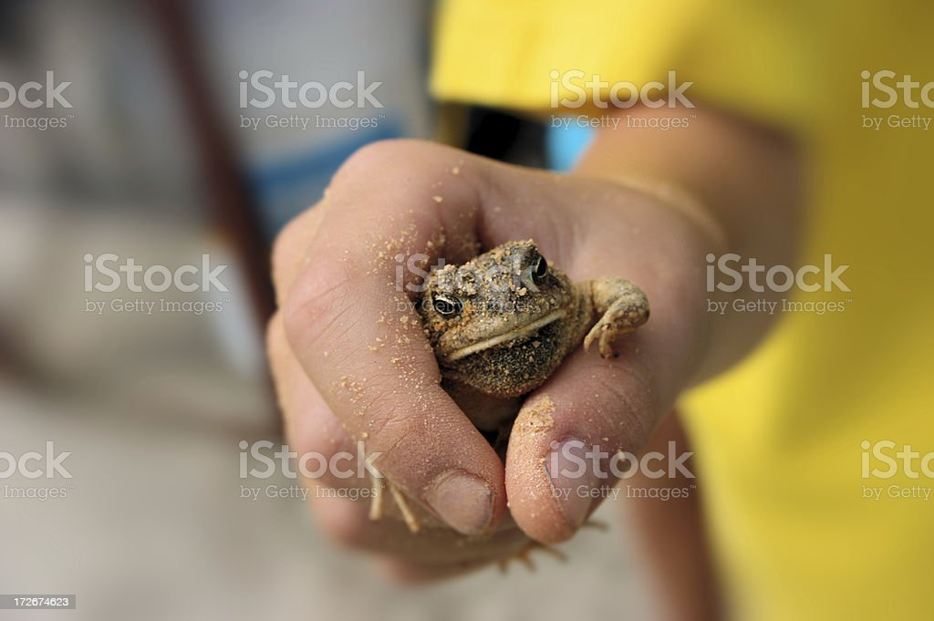 Captured frog royalty-free stock photo