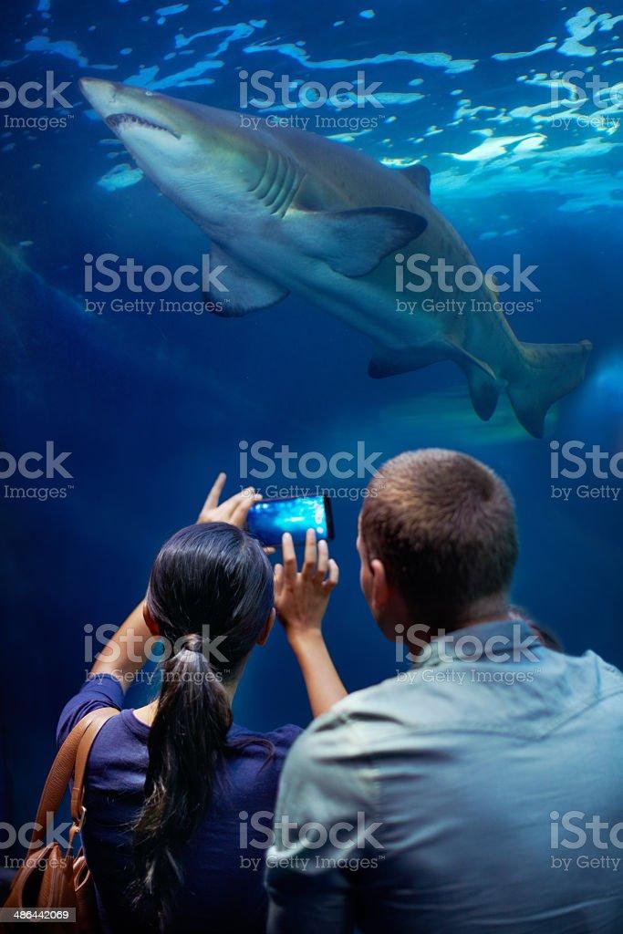Capturing an aquatic king stock photo