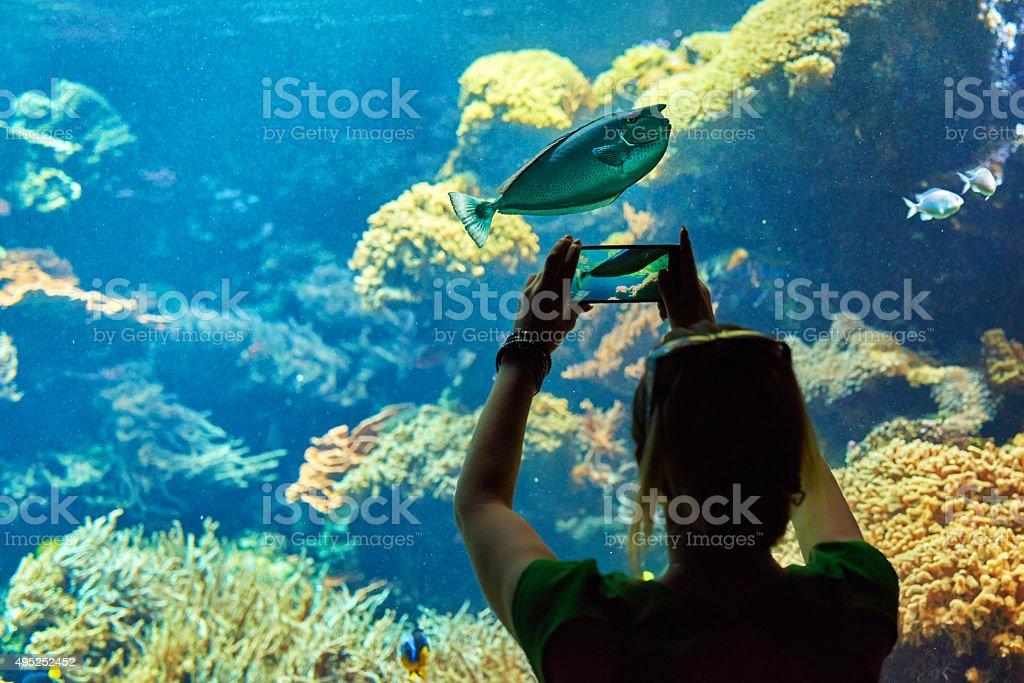 capturing pictures in aquarium stock photo