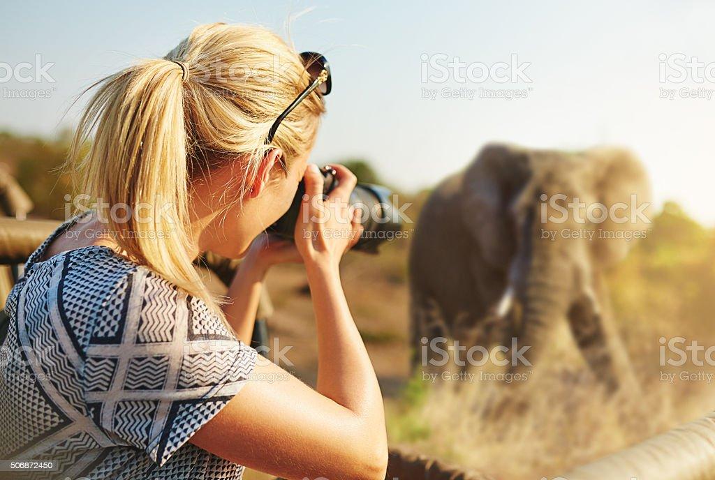Cropped shot of a female tourist taking photographs of elephants...