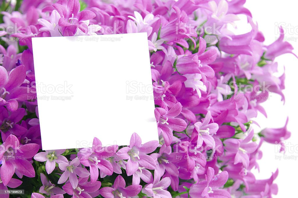 capy space in flowers royalty-free stock photo