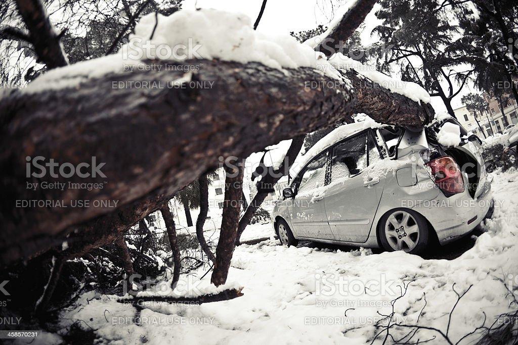 Car crashed under tree stock photo