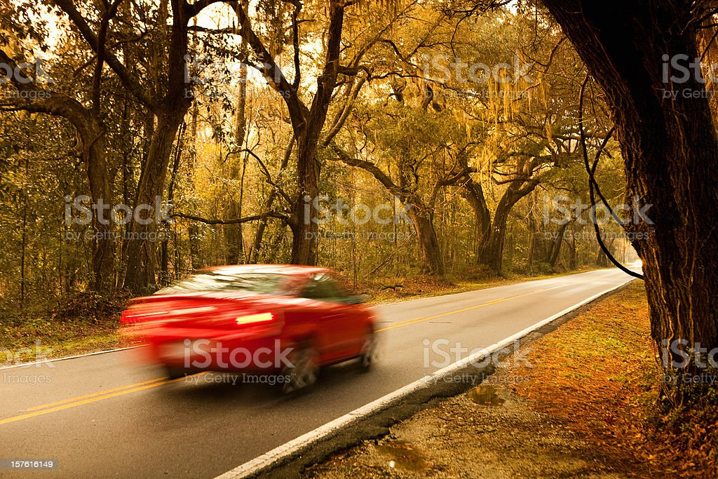 Car drives down a plantation forest freeway royalty-free stock photo