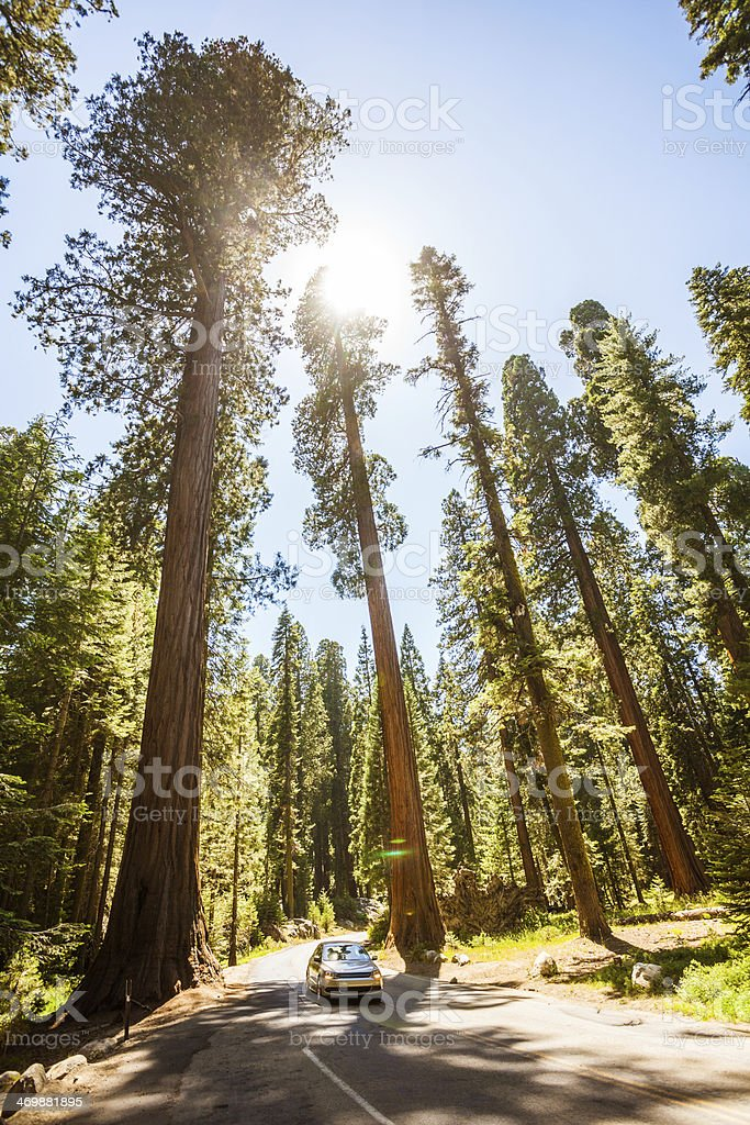 Car Driving in Sequoia National park stock photo
