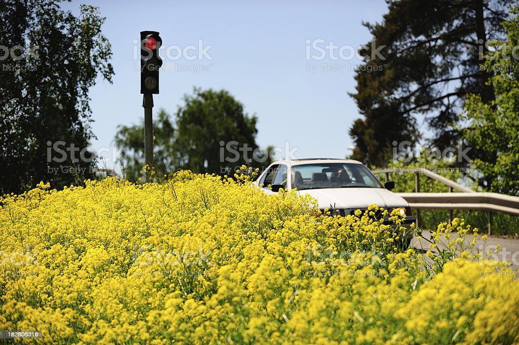 Car driving through yellow spring flowers royalty-free stock photo