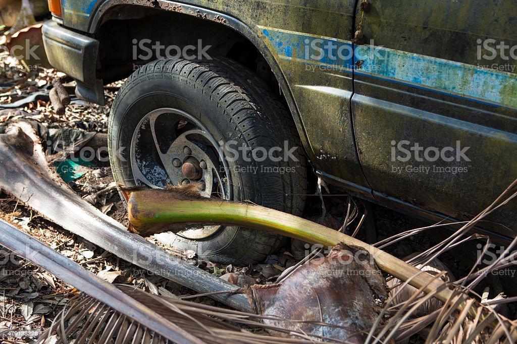 Car in  jungle stock photo