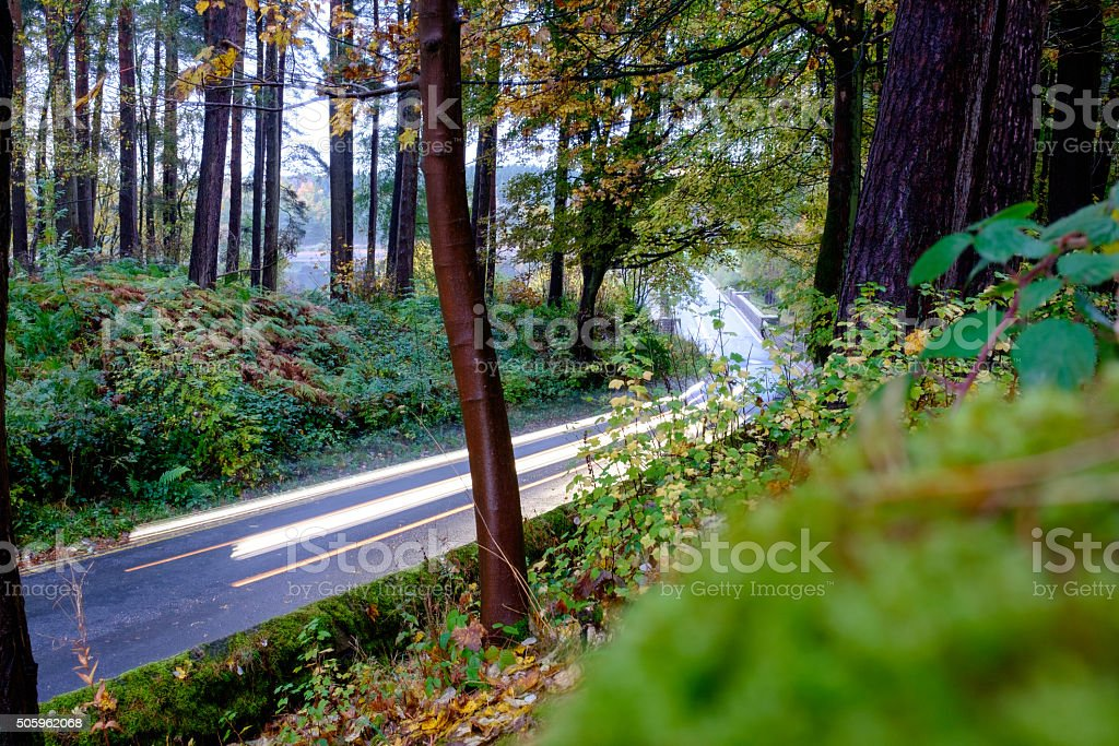 Car lights through a forrest stock photo