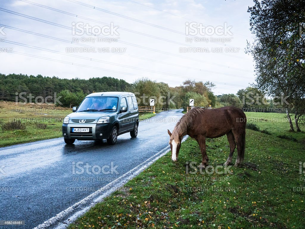 Car passing a New Forest Pony stock photo