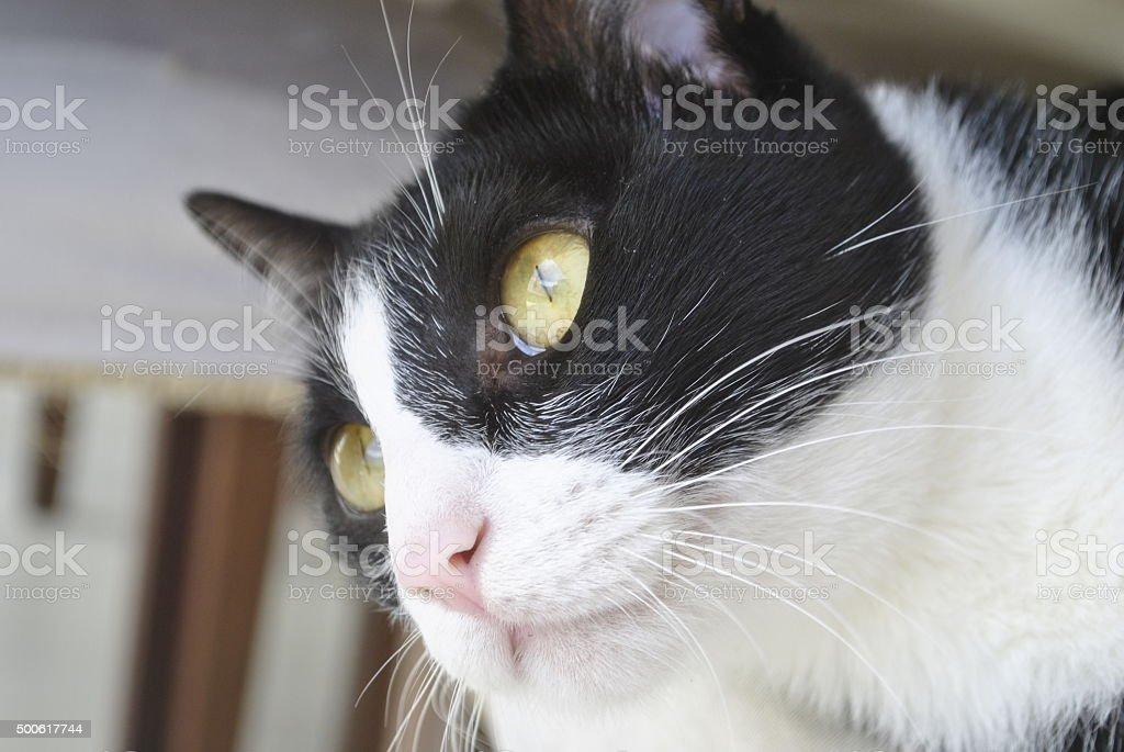 Cara de gato stock photo