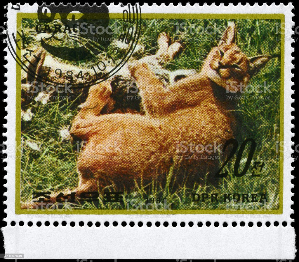 Caracal royalty-free stock photo