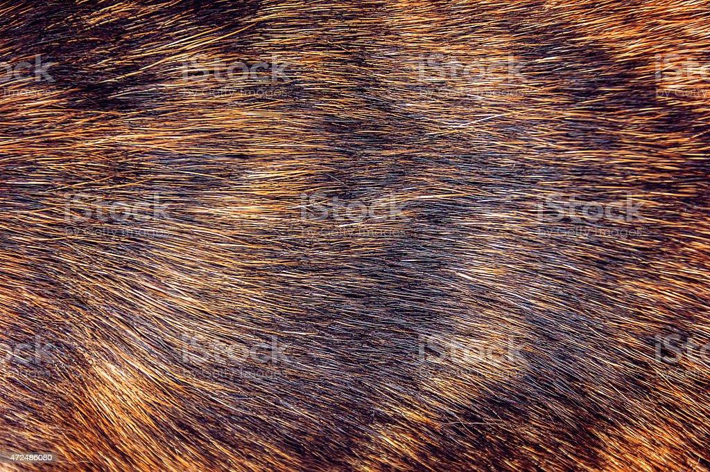 Caramel dog hair texture. stock photo