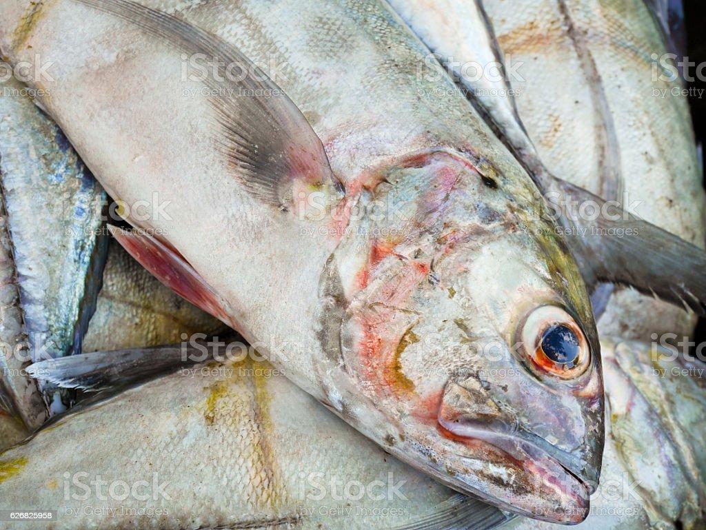 Caranx in fish market stock photo