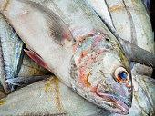 Caranx in fish market