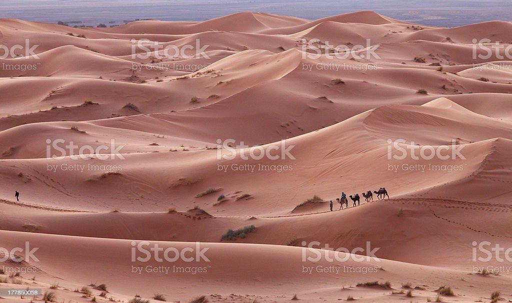 Caravan in Sahara desert Morocco stock photo