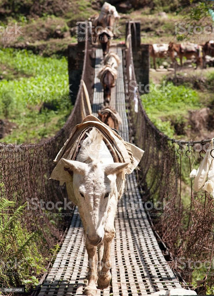Caravan of mules on rope hanging suspension bridge in Nepal stock photo
