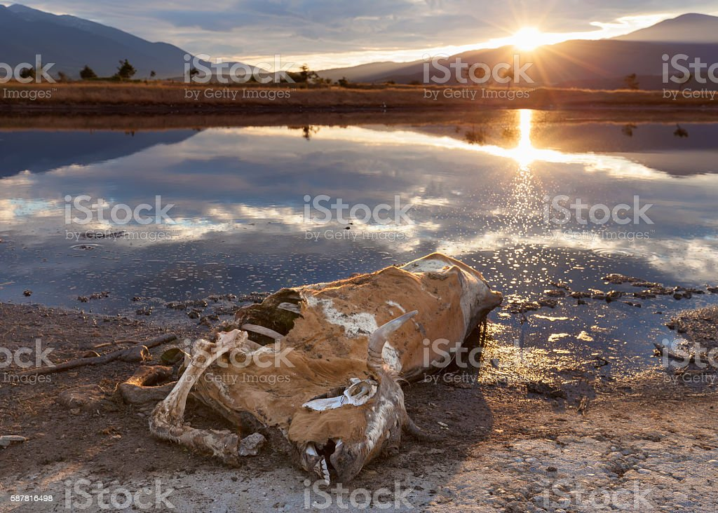 Carcass of the animal left to rot in nature stock photo