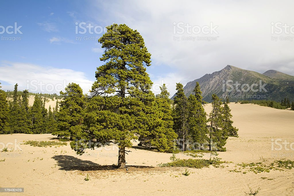 Carcross Desert royalty-free stock photo