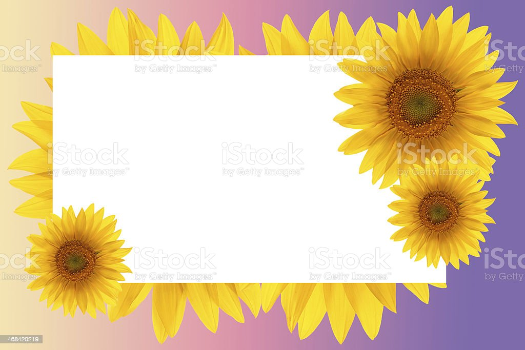 card sunflower frame flower backgrounds sunset royalty-free stock photo