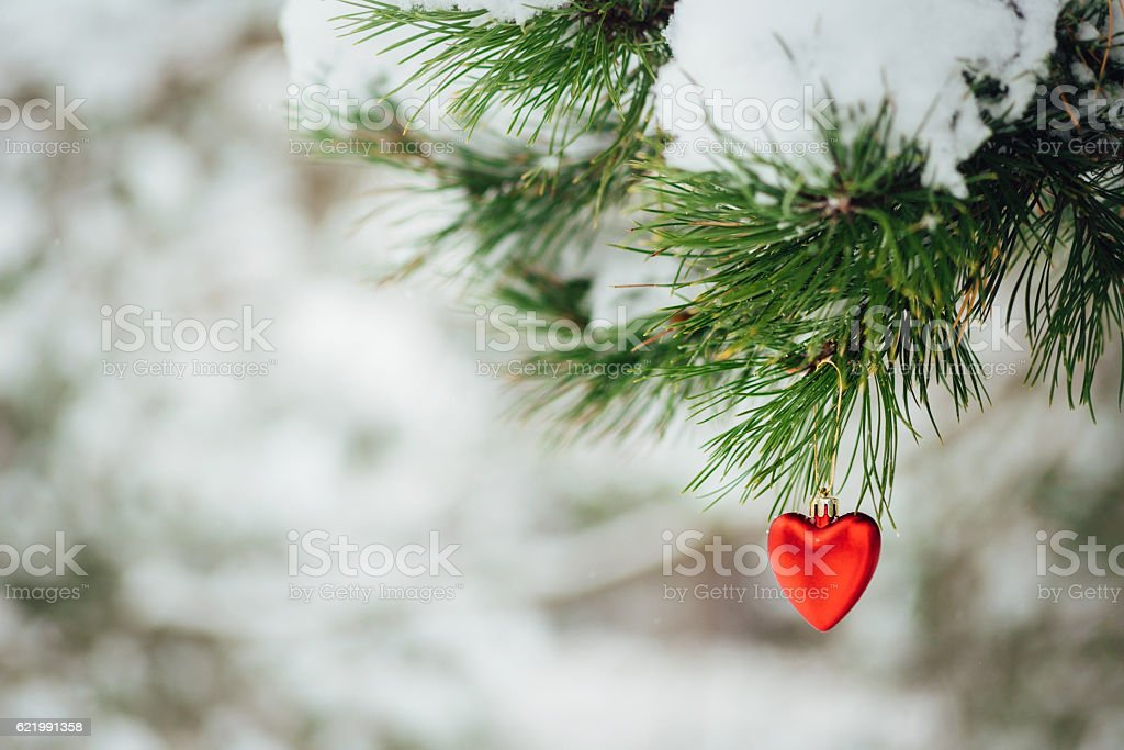 Card with red heart christmas decoration on pine branch stock photo