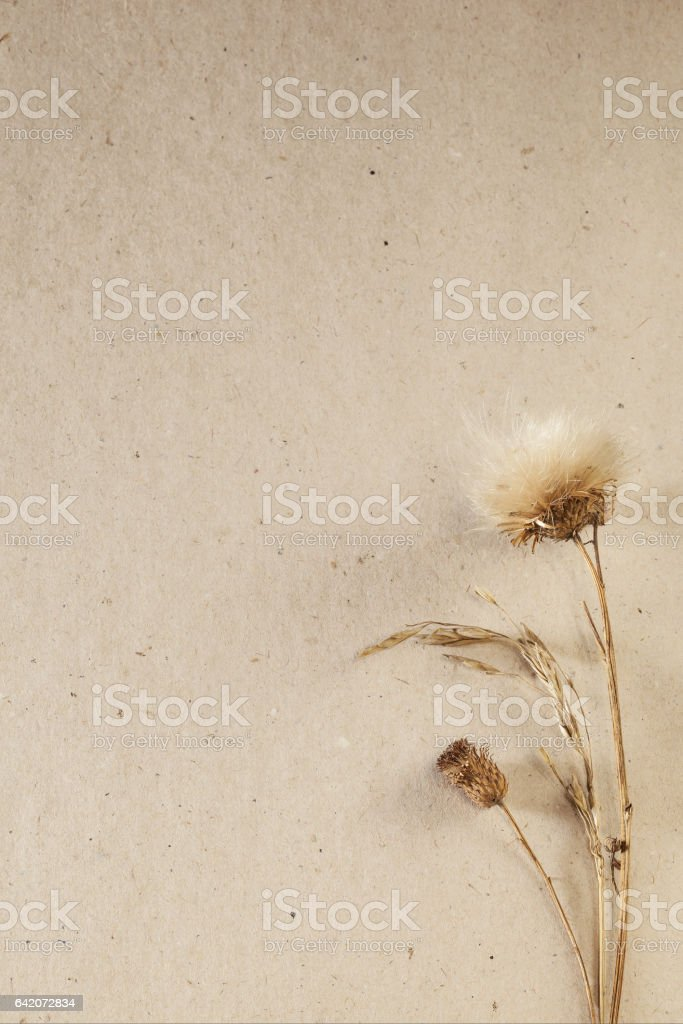 Cardboard background with dried plants, vertical stock photo